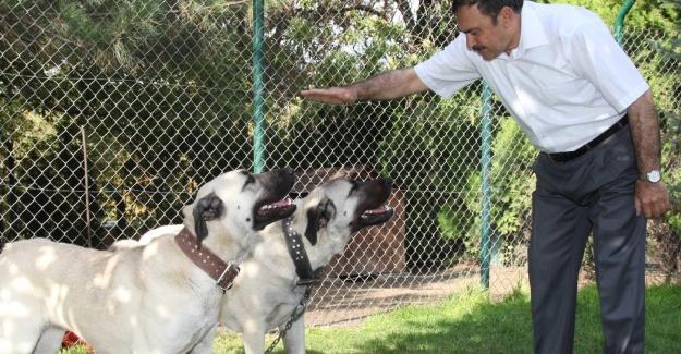 Bakan Eroğlu: Hayvanların Korunması İçin Vatandaşlarımızdan Hassasiyet Bekliyoruz