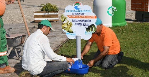 Çukurova Belediyesi Sokak Hayvanlarını Susuz Bırakmıyor