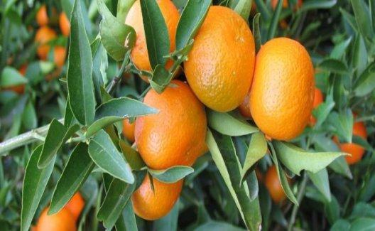 Kilo Vermek İsteyenler C Vitaminine Dikkat