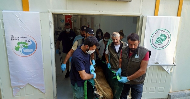 Suriye'den Hayvanlar Türkiye'ye Getirildi