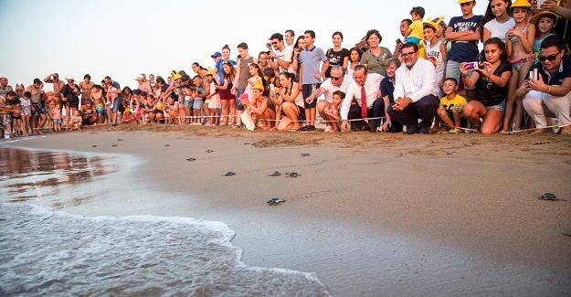 Yavru Kaplumbağalar Akdeniz'den Sahile Bırakıldı