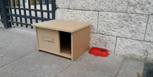CHP'li Altıok Kedi Evleri Yaptırdı