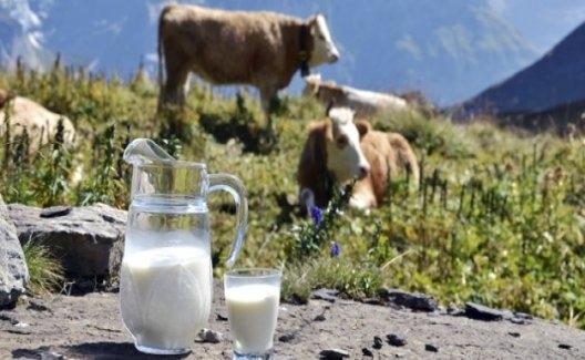 Toplanan İnek Sütü Miktarı Yıllık Yüzde 10 Arttı