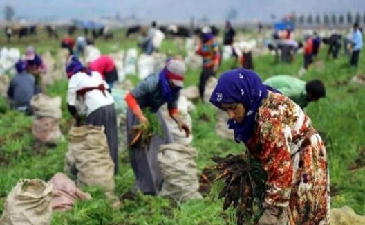 Mevsimsimlik Kadın İşçilerin Günlük Ücretleri 2017'de 13,5 Arttı