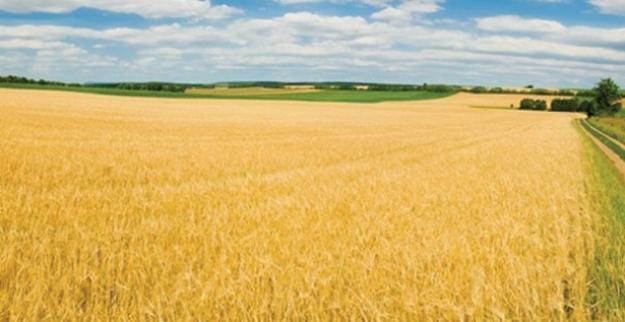 Tarım-ÜFE Şubat'ta Yüzde 0,86 Arttı