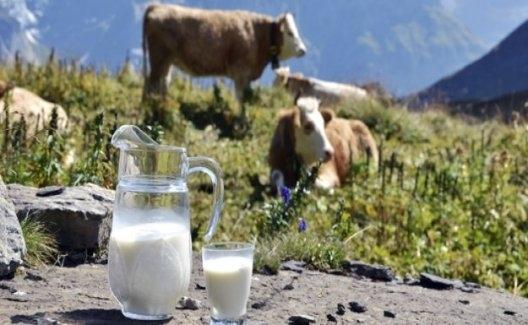 Nisan Ayında 899 Bin 190 Ton İnek Sütü Toplandı