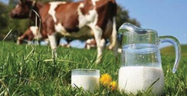 Mayıs Ayında 915 Bin 998 Ton İnek Sütü Toplandı