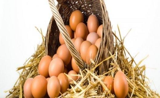 Tavuk Yumurtası Üretimi Yüzde 4.4 Tavuk Eti Üretimi Yüzde 10.1 Arttı