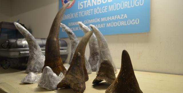 Atatürk Havalimanı'nda 34 Kilogram Gergedan Boynuzu Ele Geçirildi