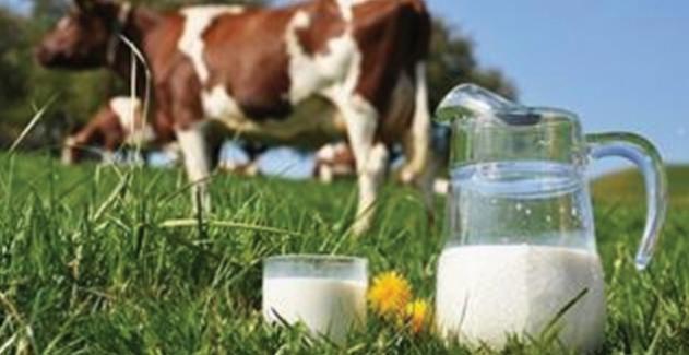 Aralık Ayında  768 Bin 714 Ton İnek Sütü Toplandı