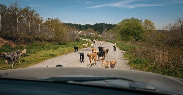 Köpek Filmi Festival Yolculuğuna 38. İstanbul Film Festivali'nde Başlıyor