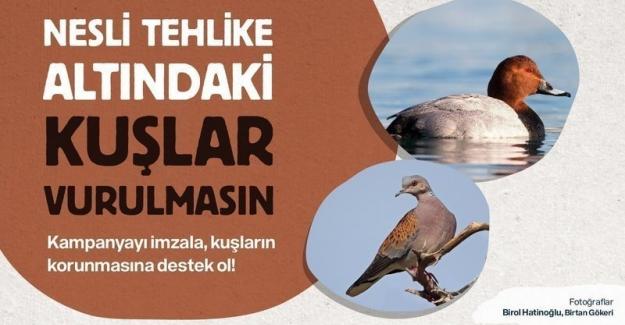 CHP'den Av Komisyonuna Çağrı: Yaşasın Kuşlar!