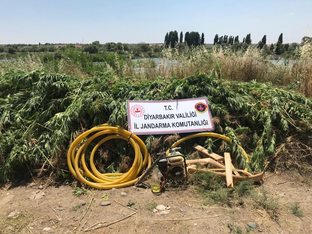 Diyarbakır'da 122 Bin 789 Kök Kenevir Bitkisi, 2 Kg Esrar Maddesi Yakalandı