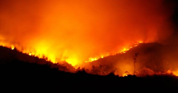 """Öz Orman-İş Genel Başkanı Aslan: """"Yangınlar Millî Servetimizi Kül Ediyor"""""""