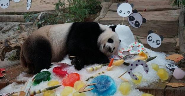 Tayland'da Ölen Panda Çinlileri Ayağa Kaldırdı