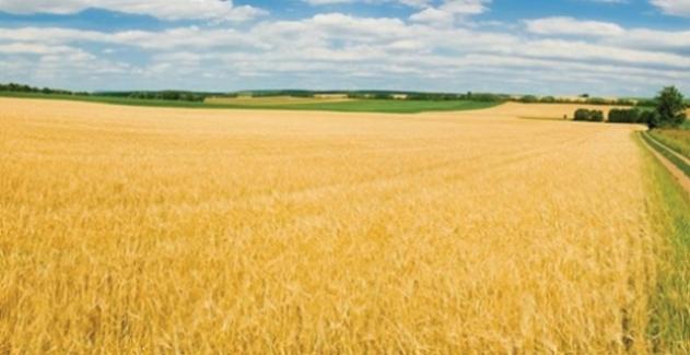 Tarım-ÜFE Aralık'ta Yüzde 2,17 Arttı