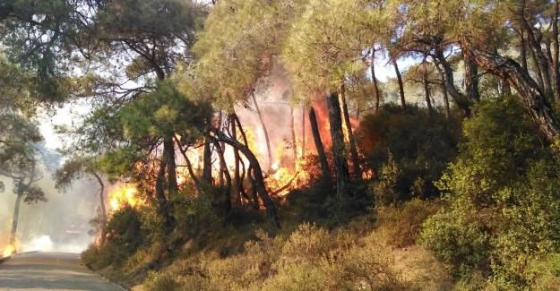 Heybeliada'da Çıkan Orman Yangını Kontrol Altına Alındı