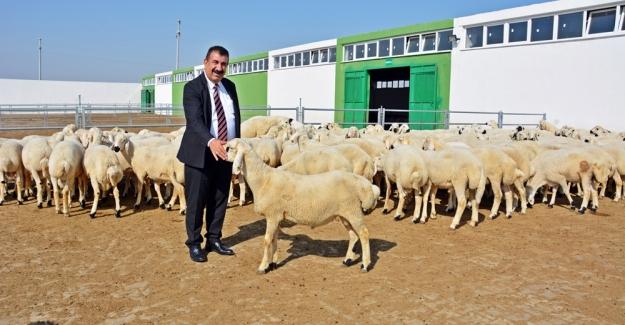 """TÜDKİYEB Genel Başkanı Çelik: """"Cari Açığın İlacı Küçükbaş Hayvancılıkta"""""""