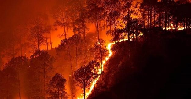 Boğaziçi'nden Araştırma: Toprağın Nemini Ölçen Teknoloji İle Orman Yangınları Önlenecek
