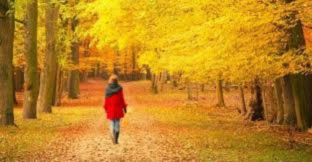 Prof. Dr. Nevzat Tarhan: İlkbahar Ve Sonbahar Bipoların Alevlenme Dönemidir