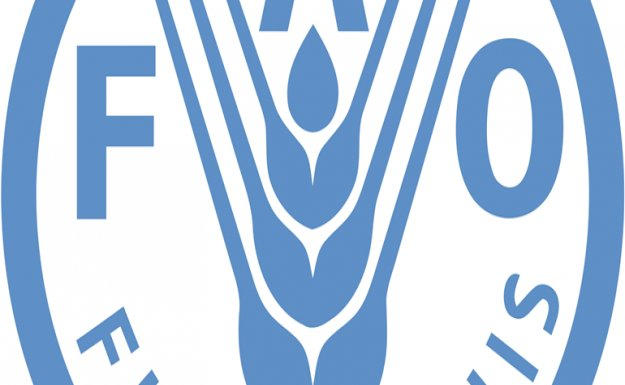 FAO: SURİYE VE BÖLGEDEKİ GIDA GÜVENLİĞİNİ SAĞLAMAK İÇİN 121 MİLYON DOLAR GEREKLİ