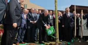 Bakan Eroğlu: 200 Bin Çınar Ağacını Toprakla Buluşturacağız