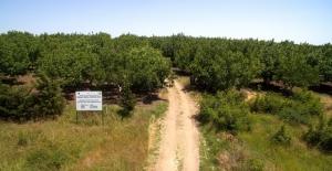 Orman Ve Su İşleri Bakanlığı'ndan Özel Ağaçlandırmaya Destek