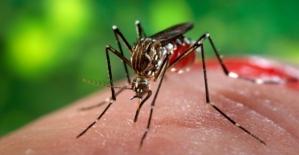 Zika Virüsüne Boğaziçi Üniversitesi El Attı