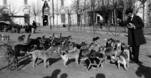 Altın Çağından Sürgün Çağına: Sokak Köpeklerinin Trajik Öyküsü