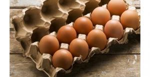 Tüketici Hakları Derneği: Zehirli Yumurta Yemek İstemiyoruz
