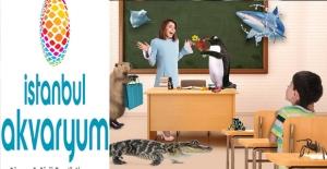 Öğretmenlere 3 Gün Boyunca İstanbul Akvaryum Ücretsiz!