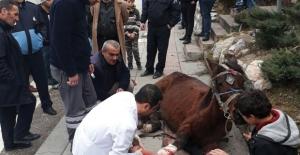 Yaralı At Kurtarıldı