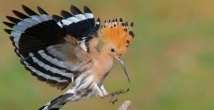 Nallıhan Kuş Cenneti Fotoğraf Yarışması Sonuçlandı