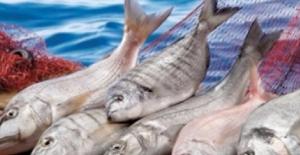 Yarın Gece Balıkçılar 'Vira Bismillah' Diyecek