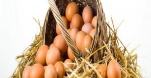 Kesilen Tavuk Sayısı Kasım Ayında Azaldı