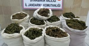 Diyarbakır'da '176,340 Kg Kubar Esrar Maddesi' Ele Geçirildi
