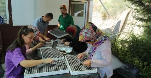 Beypazarı Belediyesi Seraları Kışlık Çiçek Ekimine Başladı