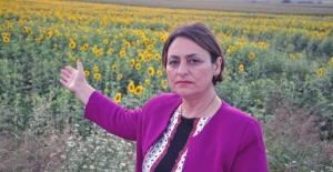 """CHP'li Şevkin: """"Türkiye'nin Yağlık Ayçiçeğinde Dışa Bağımlılığı Sona Ermelidir"""""""