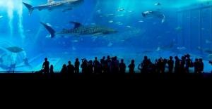 Çin'de Deniz Seviyesinin 2 Kilometre Üstünde Akvaryum Açıldı