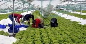 Bitkisel Üretim Bir Önceki Yıla Göre Arttı