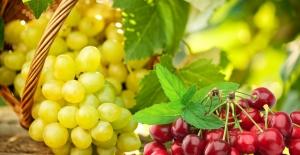 Yaş Meyve Sebze Ve Mamulleri URGE Projeleriyle Hedef Pazarlara İhraç Edilecek