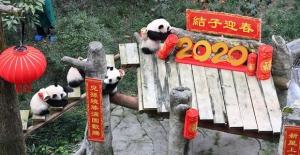 Dünyanın En Yaşlı Pandası, 4 Torunu İle Bahar Bayramı'nı Kutladı