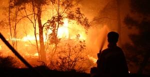 """Öz Orman-İş Genel Başkanı Aslan Orman Yangınları İçin Uyardı: """"Kış Yangınları Düşündürmeli"""""""