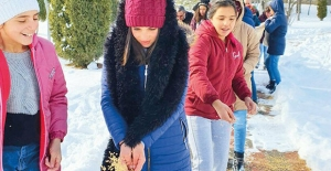 Sivas Çocuk Evlerindeki Çocuklar Hem Kuşlara Yem Bıraktı, Hem de Sokak Kedileri İçin Kulübe Yaptı