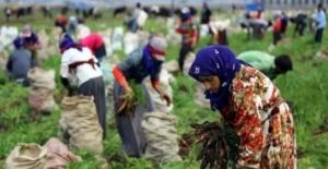 Mevsimlik Tarım İşçilerinin Ortalama Günlük Ücretleri 2019 Yılında Yüzde 17,1 Arttı
