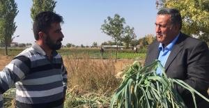 CHP' li Gürer: Çiftçi Destek Bekliyor