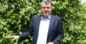 """CHP'li Barut: """"Limon İhracatındaki Yasağı Kaldırın"""""""