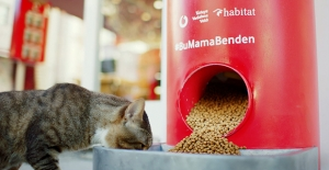 """Türkiye Vodafone Vakfı'ndan """"Salgında Sokak Hayvanlarını Unutma"""" Çağrısı"""