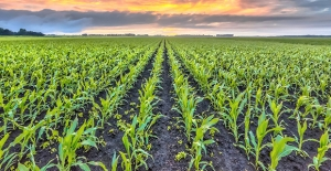 Cargill Salgın Döneminde Çiftçileri Yalnız Bırakmadı