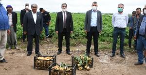 CHP'li Barut'tan Patates Ve Soğan Üreticileri İçin Tarlada Destek Çağrısı
